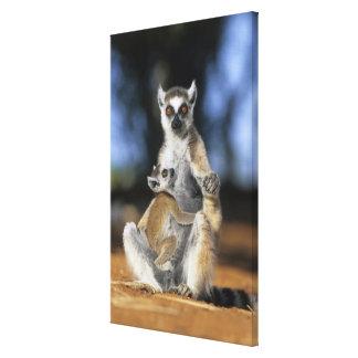 Lemur Anillo-atado, (catta del Lemur), madre y Impresión En Lona