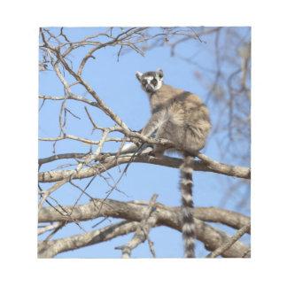 Lemur Anillo-atado (catta del Lemur) que se calien Bloc