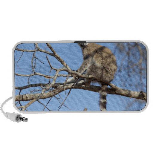 Lemur Anillo-atado (catta del Lemur) que se calien Mini Altavoces