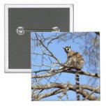 Lemur Anillo-atado (catta del Lemur) que se calien Pins