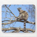 Lemur Anillo-atado (catta del Lemur) que se calien Tapete De Ratones