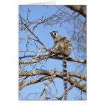 Lemur Anillo-atado (catta del Lemur) que se calien Tarjeta
