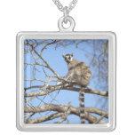 Lemur Anillo-atado (catta del Lemur) que se Colgante Cuadrado