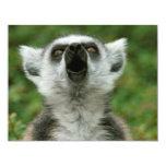 Lemur Anillo-Atado Comunicado