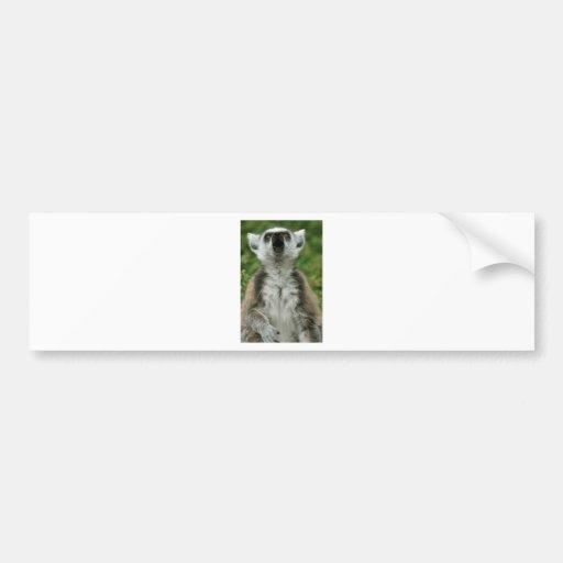 Lemur Anillo-Atado Etiqueta De Parachoque