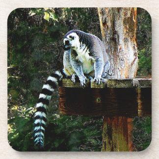 Lemur Anillo-Atado Posavasos De Bebida