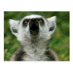 Lemur Anillo-Atado Tarjetas Postales