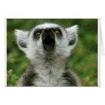 Lemur Anillo-Atado Tarjeton