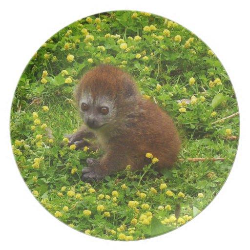 Lemur apacible de Alaotran del bebé Plato