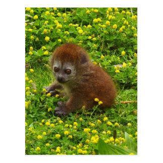 Lemur apacible de Alaotran del bebé Postales