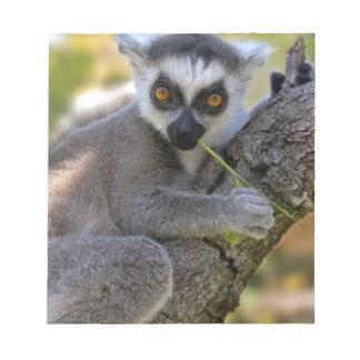 Lemur atado anillo del bebé bloc