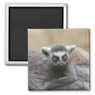 Lemur Baby  Magnet