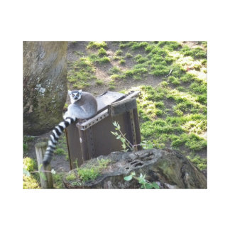 Lemur Gallery Wrap Canvas