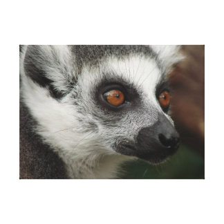 Lemur Gallery Wrapped Canvas
