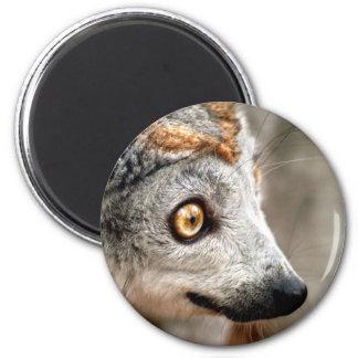 Lemur coronado hembra iman de frigorífico