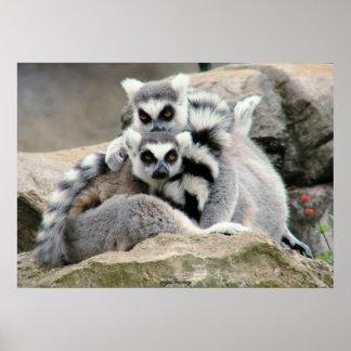 Lemur Cuddles Poster