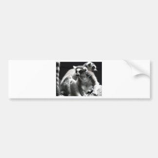 lemur de 2 ringtail pegatina para auto