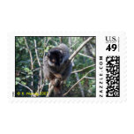 Lemur de Brown, Madagascar