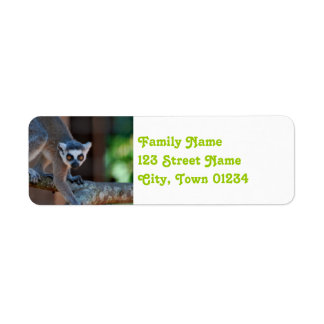 Lemur de Madagascar Etiqueta De Remite