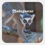 Lemur de Madagascar Pegatina Cuadrada