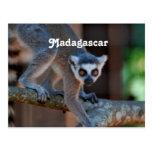 Lemur de Madagascar Postales