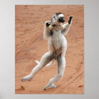 Lemur de Sifaka del baile Poster