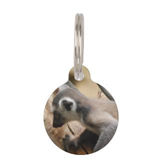 Lemur del bebé identificador para mascotas