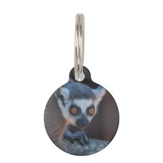 Lemur del bebé placa para mascotas