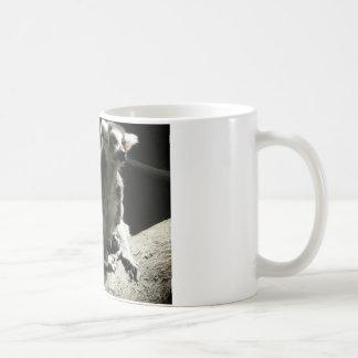 lemur del ringtail taza de café