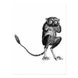 Lemur del vintage postales