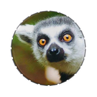 """""""Lemur"""" design gifts and products Candy Tin"""