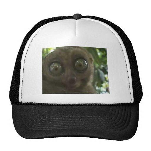 Lemur dramático gorras de camionero