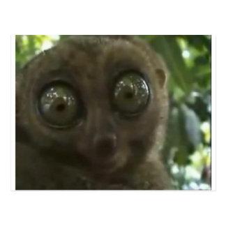 Lemur dramático tarjetas postales