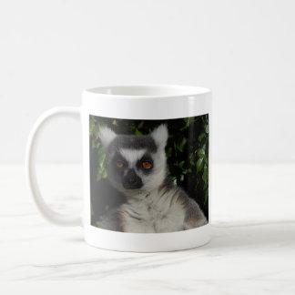 Lemur el mirar fijamente taza de café