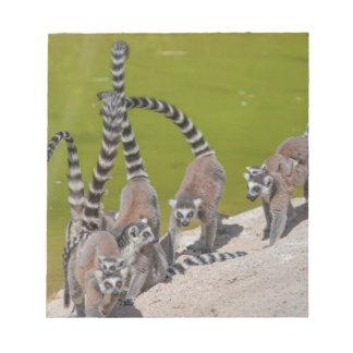 lemur en el parque zoológico bloc de papel