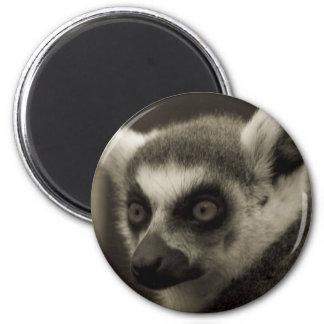 lemur face 2 inch round magnet