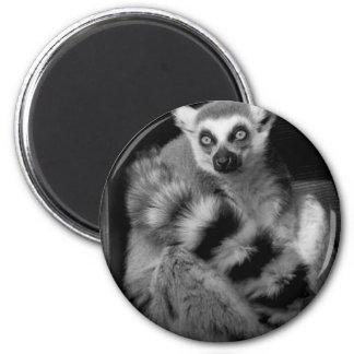 lemur fridge magnets