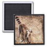 Lemur Imanes