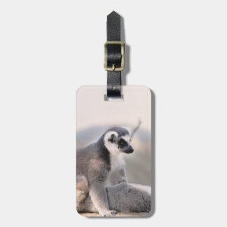 Lemur in Madagascar Bag Tag