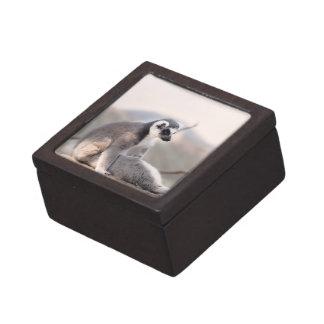 Lemur in Madagascar Premium Jewelry Box