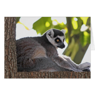 Lemur in Thought Card