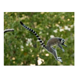 Lemur Jump Postcard