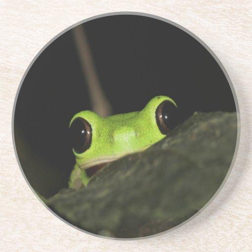 Lemur leaf Frog Coasters