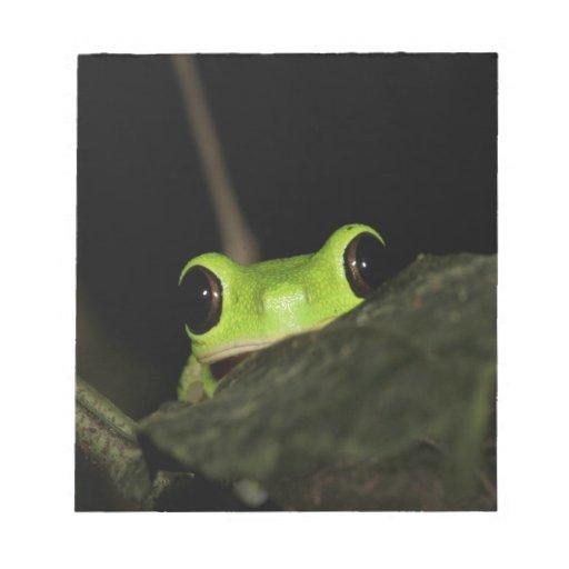 Lemur leaf Frog Memo Note Pads