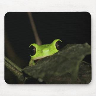 Lemur leaf Frog Mouse Pad