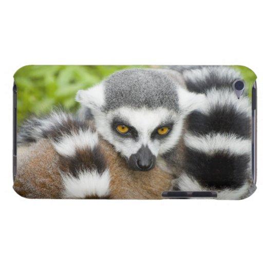 Lemur lindo Stripey Case-Mate iPod Touch Coberturas