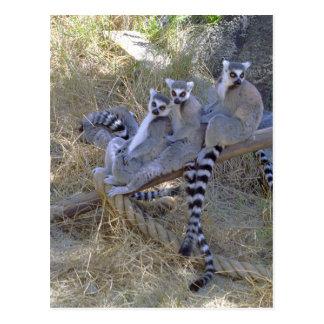 Lemur Line Postcard