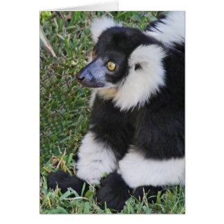 Lemur Looker Card