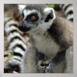 Lemur Monkey Print