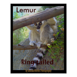 Lemur Peeking Poster
